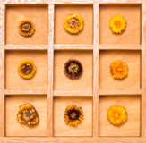 Shadow box with straw flowers Royalty Free Stock Photography