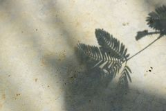 Shadow branch of leaves on the concrete background. stock photography