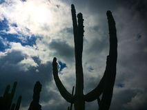 The Shadow of Cactus. Sun and cactus Royalty Free Stock Image
