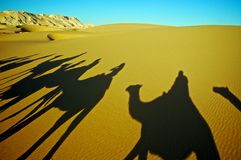 Shadow of Camel Caravan. Elongated camel and rider shadows stretch out over the Sahara Desert Royalty Free Stock Photo