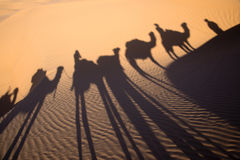 Shadow of a camel caravan in the sand, Tunisia royalty free stock image