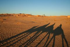 Shadow of camels Stock Image
