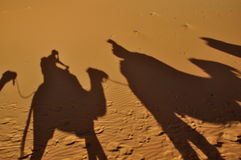 Shadow of Camels Stock Photos