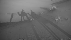 Shadow of camels in the Sahara desert, Morocco Stock Photos