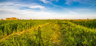 Shadow of camera tripod on Wheel tracks in cultivated fields Stock Photos