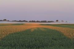 Shadow car on wheat field stock photos