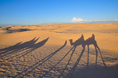 Shadow of caravan on the desert sand Stock Photography