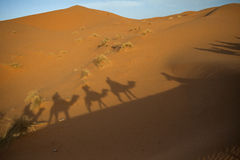 Shadow caravan in the Sahara Stock Photos