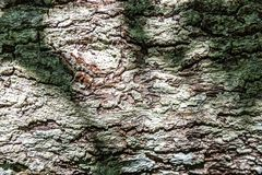 Shadow on old tree bark royalty free stock image
