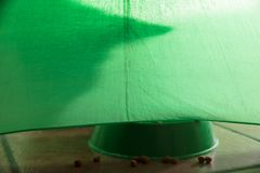 Shadow of a cat on a green background. Shadow of a cat under a green background with croquettes abstract adorable animal animals art bars beef carnivore cartoon stock photos