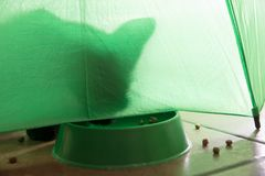 Shadow of a cat on a green background. Shadow of a cat under a green umbrella eating  croquettes abstract adorable animal animals art background bars beef royalty free stock images