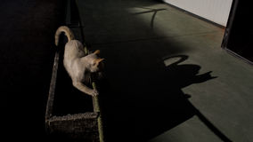 Shadow cat. A cat looking to his shadow Royalty Free Stock Image