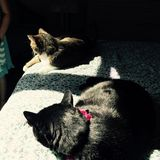 Shadow and Cats. Tabby and black house cats lie in the sun casting deep shadows on blue blanket Royalty Free Stock Photo