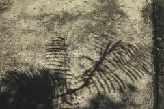 Shadow on the cement floor. royalty free stock image