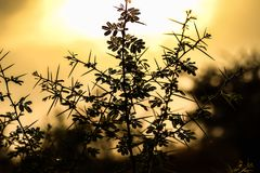 Shadow click of flower royalty free stock photos
