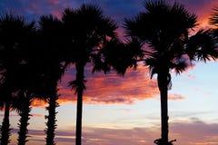 Shadow coconut tree. On evenin Royalty Free Stock Photography