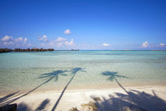 Shadow of coconut trees in a beach. Stock Photography