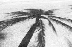 The shadow of the coconut trees on the lawn. Black and white color Stock Images
