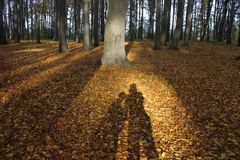 Shadow of a couple in the forest 01 stock photography