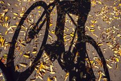The shadow of a cyclist and bike on the road with autumn leaves Royalty Free Stock Photos