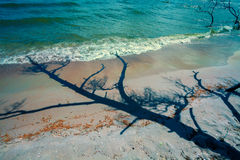 Shadow of the dead tree on the beach Royalty Free Stock Photo
