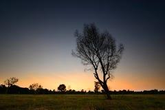 Shadow dead trees Royalty Free Stock Photo