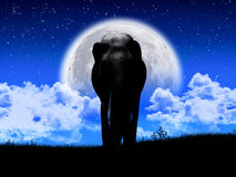 Shadow elephant tricky at night Royalty Free Stock Photography