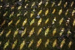 The shadow of the fence on the grass. A wooden fence is reflected from the sun in the yard. Texture, abstract background. The shadow of the fence on the grass. A royalty free stock photo
