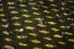 The shadow of the fence on the grass. A wooden fence is reflected from the sun in the yard. Texture, abstract background. The shadow of the fence on the grass.A stock photos
