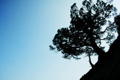 Shadow-figure of a tree Stock Photos