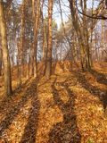 Shadow in the forest. Long shadows in the forest in fall Royalty Free Stock Image