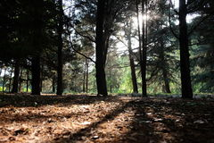 Shadow of Autumn mysterious forest. Bright sun light shine through trees. Shadow on the yellow leaf Royalty Free Stock Images