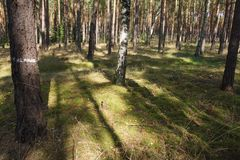 Shadow in the Forest. Green Grass and shadows in the Forest Stock Photos