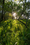Shadow forest of light Royalty Free Stock Photography