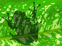 The shadow of frog. Silhouette over the green plant background Royalty Free Stock Photo