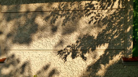 Shadow of the garden on white wall Stock Image