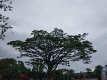 Dark giant tree stock images