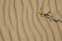 The shadow of the grass on the sand Royalty Free Stock Photos