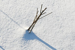 Shadow of halm on snow covered field Royalty Free Stock Photography