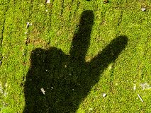 Shadow of hand showing victory sign. On green background Royalty Free Stock Photography