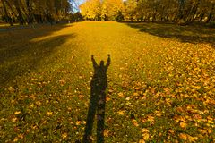 Shadow of happy man in bright fallen leaves in autumn forest at sunny weather. Fall maple trees. Yellow nature background.  Royalty Free Stock Image