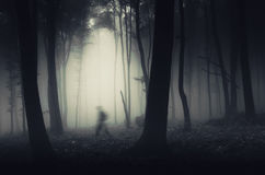 Shadow in the haunted forest Royalty Free Stock Images