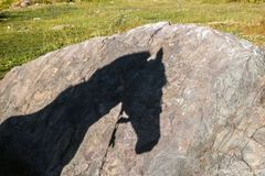 Shadow of a horse on the rock Stock Images