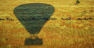 Shadow of Hot Air Balloon on Animal Herd Running Across Green Plains Royalty Free Stock Photo