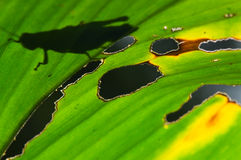 Shadow of insect on leaf Stock Images