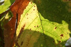 Shadow on leaf Royalty Free Stock Photo