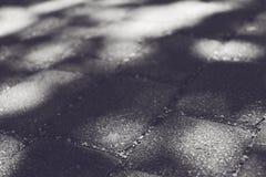 Shadow of leaf tree on brick ground stock photos