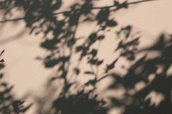 Shadow leaves blur on the wall. royalty free stock photo