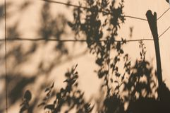 Shadow leaves on the wall. royalty free stock photo