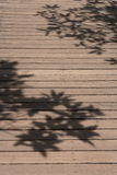 Shadow leaves. Shadows of leaves falling on the floor Stock Images